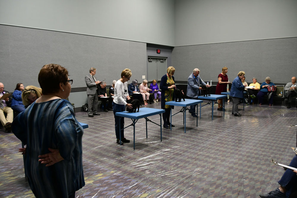Hands-on portion of Judging Seminar at 2018 AKC National Show.
